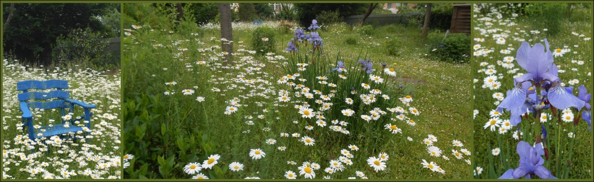 Sommerwiese am Hospital